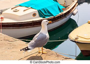 Yellow-legged gull - View of yellow-legged gull in the...