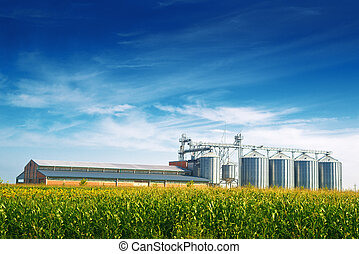 Grain Silos in Corn Field Set of storage tanks cultivated...