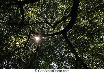 Rays of sunshine thru tree branches