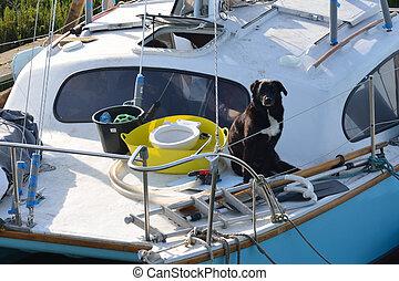 dog on boat - Dog sitting on boat