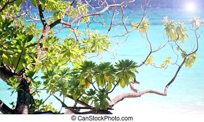 Foliage of a tropical tree against turquoise water of the...