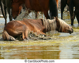 The Nature Of Baikal. A herd of horses bathed in sulfuric...