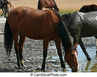 The Nature Of Baikal A herd of horses bathed in sulfuric...