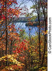 otoño, bosque, lago