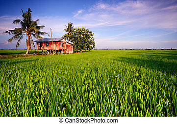 Traditional House in Paddy Field - Image of traditional...