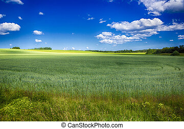 field irrigation with a crop - Field with a crop in the...