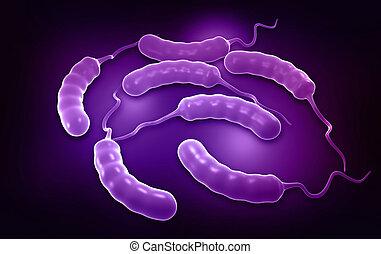 Coli bacteria
