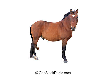 horse - brown horse isolated on white