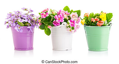 Spring flowers in bucket Isolated on white background