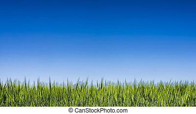 Grass field under a clear blue sky - Springtime Texas rass...