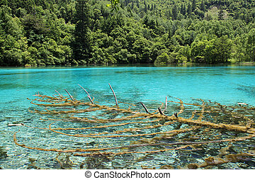 Jiuzhaigou - A tree inside a beautiful turkouise Five Flower...