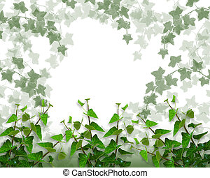 Ivy Border, background or Frame - Ivy Image and illustration...