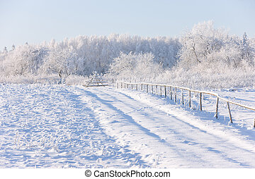Field and trees in frost and snow