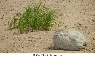 Limestone lying on the sand - Video 1080p - Limestone lying...
