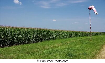 Corn field has wind sock - red and white pointer indicating...