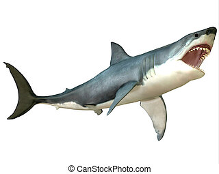 Great White Shark Attack - The Great White Shark is an...