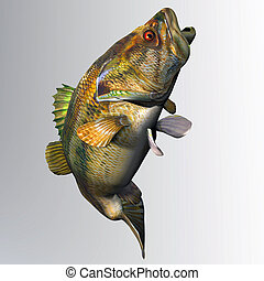 Largemouth Bass Strike - The Largemouth Bass is a freshwater...