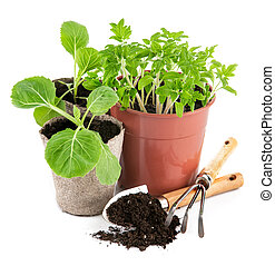 Garden tools with seedlings vegetable Isolated on white...