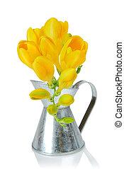 Freesia flowers - Yellow freesia flowers on white background...