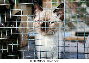 Caged Animal - A kitten in a cage at the animal shelter