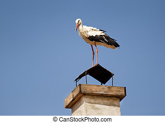 White Stork (Ciconia ciconia) on a building chimney