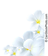 Delicate white flower bloom - Close-up of delicate white...