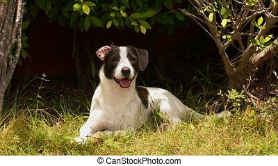 Young Cute Dog Playing in Grass at Summer Sunny Day.