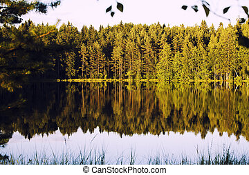 forrest lake with reflection - pure forrest lake with...