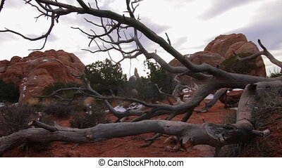 Arches National Park, Dead Tree - The camera pushes forward...