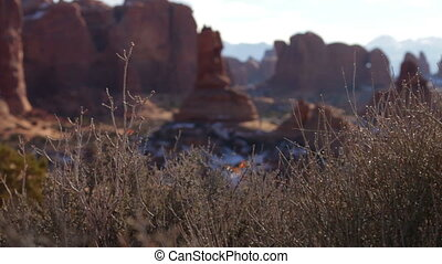 Arches National Park 03 - Rack focus from some bushes in the...