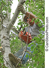Tree Trimmer - Man with hard hat and chain saw up in a tree...
