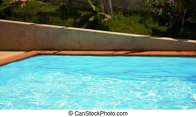 Lovely Pool in the Garden - Lovely pool in the garden in the...