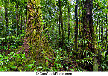 Rainforest - Scene in rainforest