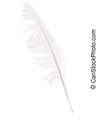 Bedraggled white feather studio isolated over white -...