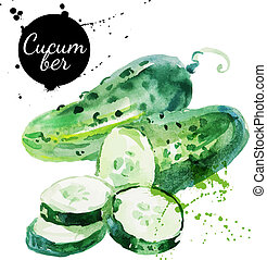 Green cucumber. Hand drawn watercolor painting on white...