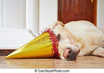 黨, 生日, 狗