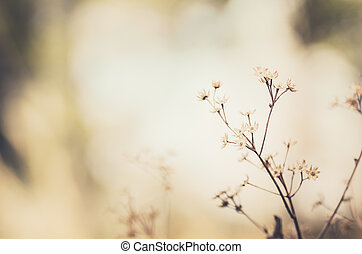 Flower plant vintage - Flower plant weed in the nature or in...