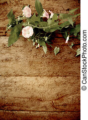 Romantic vintage background - Perennial vine flower on old...