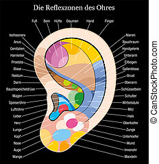 Ear reflexology german description - Ear reflexology chart...