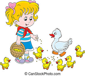 Girl feeding ducklings - Little girl feeds a white duck and...