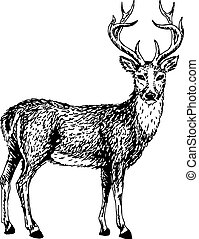 wild deer - Artistic sketch of young wild deer. Vector...