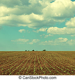 landscape of beautiful agriculture field and blue sky
