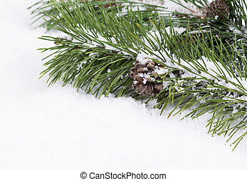 Fir Branch with snow and pine cone - Closeup front view of...