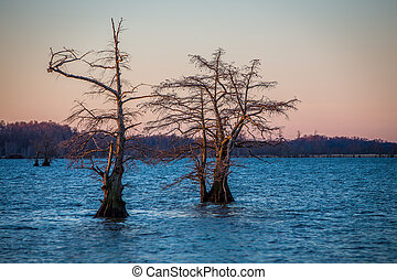 Cypress Forrest - Cypress trees on reelfoot lake Tennessee