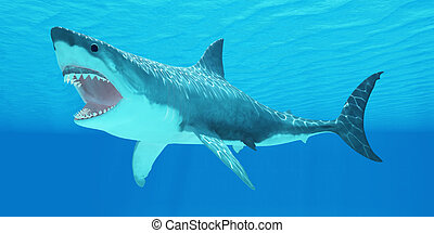 Great White Shark Underwater - The Great White Shark can...