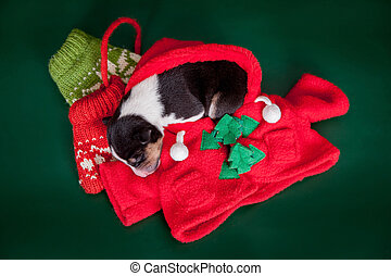Small basenji puppy with cristmas decoration - Newborn...