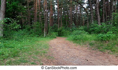 Woman running on forest trail