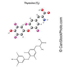 Thyroxine - Structural chemical formula and model of...