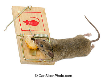 The mouse in a mousetrap