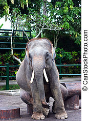 Sitting elephant - Elephant having rest on the bench